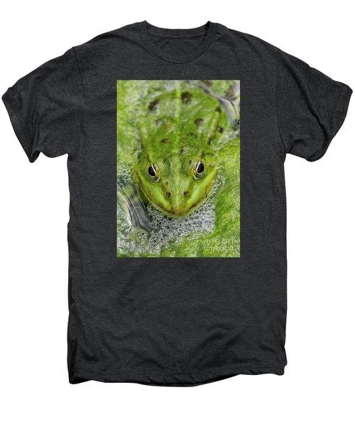 Green Frog Men's Premium T-Shirt by Matthias Hauser