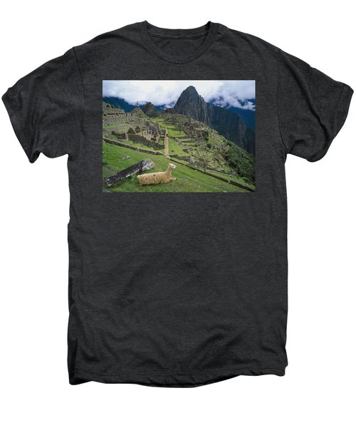 Llama At Machu Picchus Ancient Ruins Men's Premium T-Shirt by Chris Caldicott