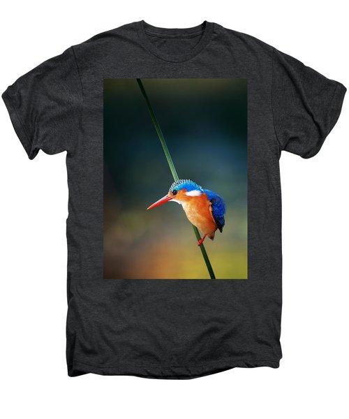 Malachite Kingfisher Men's Premium T-Shirt by Johan Swanepoel