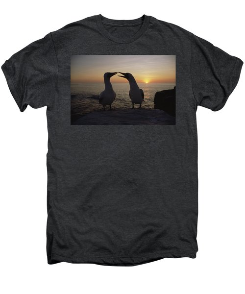 Masked Booby Couple Courting Galapagos Men's Premium T-Shirt by Konrad Wothe