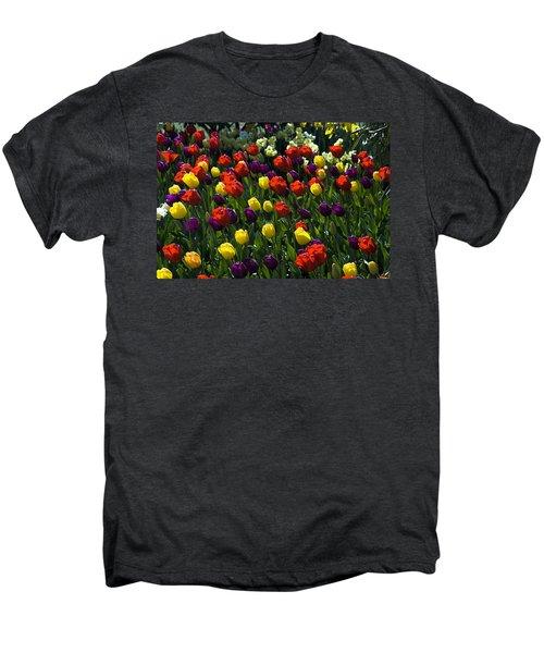 Multicolored Tulips At Tulip Festival. Men's Premium T-Shirt