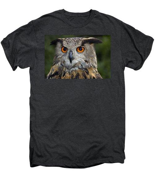Owl Bubo Bubo Portrait Men's Premium T-Shirt by Matthias Hauser