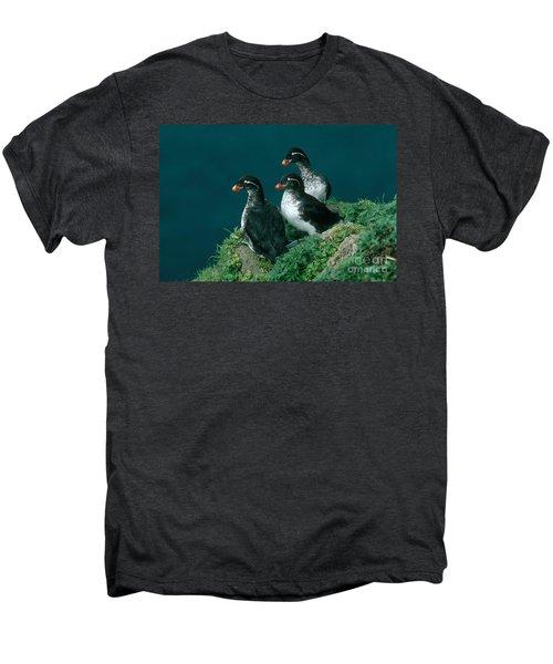 Parakeet Auklet Men's Premium T-Shirt