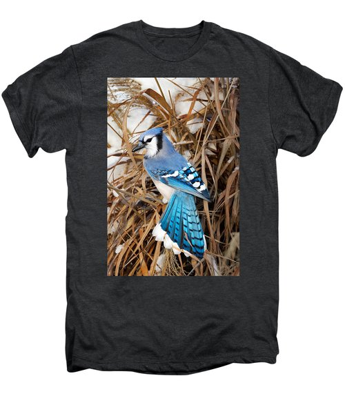 Portrait Of A Blue Jay Men's Premium T-Shirt by Bill Wakeley