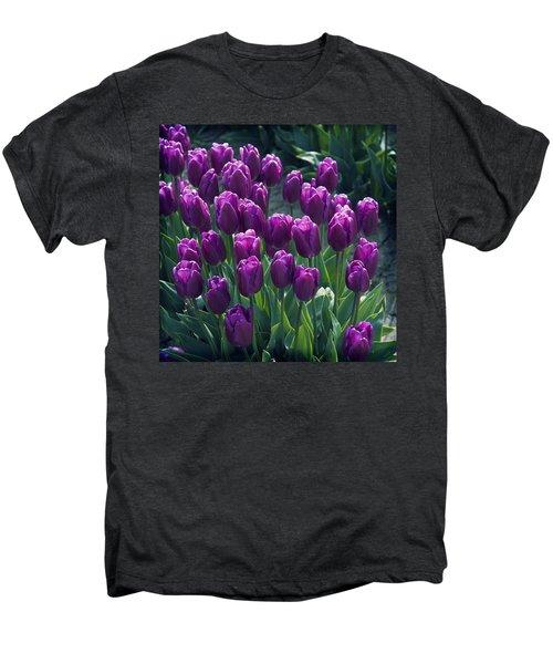 Purple Tulips Men's Premium T-Shirt