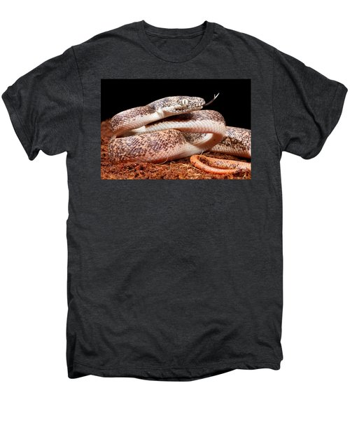 Savu Python In Defensive Posture Men's Premium T-Shirt