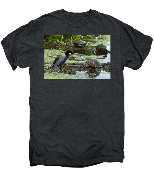 Turtles And Anhinga Men's Premium T-Shirt by Mark Newman