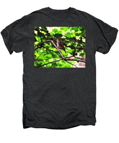 Wood Thrush Singing Men's Premium T-Shirt