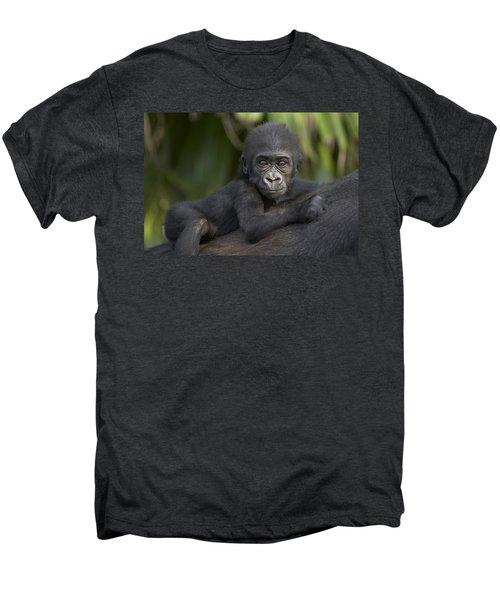 Western Lowland Gorilla Gorilla Gorilla Men's Premium T-Shirt by San Diego Zoo