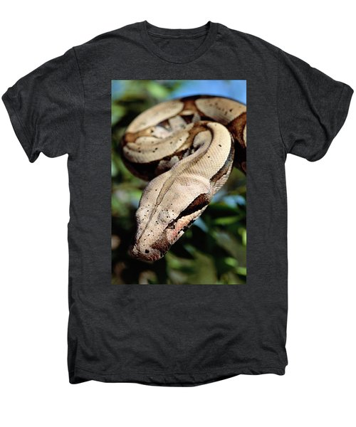 Boa Constrictor Boa Constrictor Men's Premium T-Shirt by Claus Meyer
