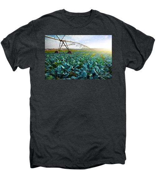 Cabbage Growth Men's Premium T-Shirt by Carlos Caetano