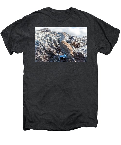 Blue Footed Booby Men's Premium T-Shirt by Jess Kraft