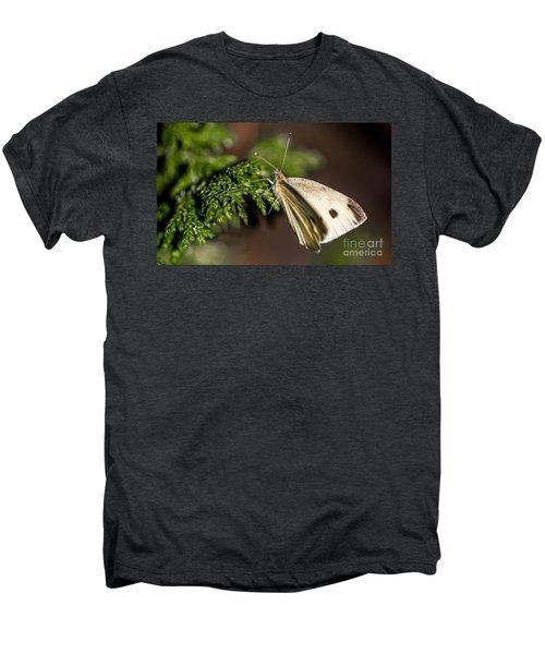 Cabbage Butterfly On Evergreen Bush Men's Premium T-Shirt