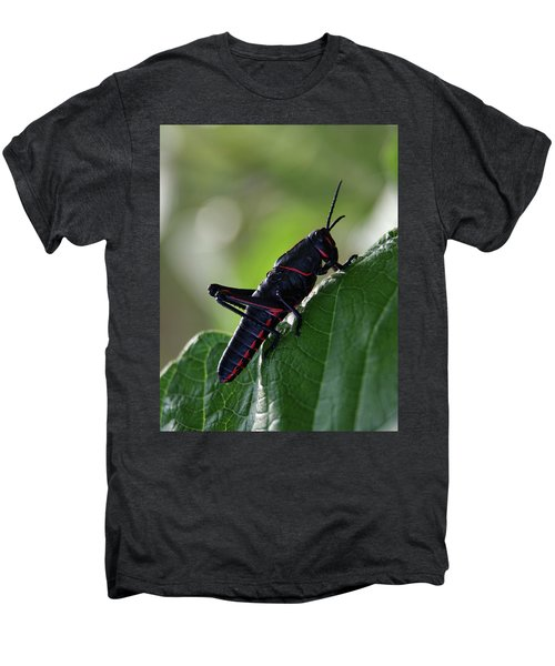Eastern Lubber Grasshopper Men's Premium T-Shirt