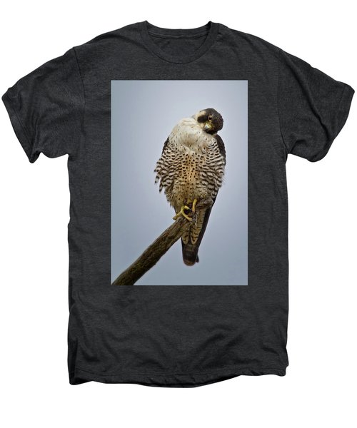 Falcon With Cocked Head Men's Premium T-Shirt