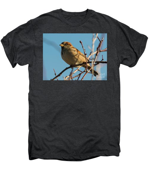 Female House Sparrow Men's Premium T-Shirt by Mike Dawson
