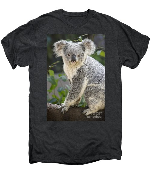 Female Koala Men's Premium T-Shirt by Jamie Pham