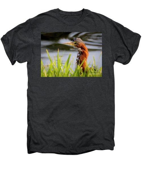 Green Heron Closeup  Men's Premium T-Shirt
