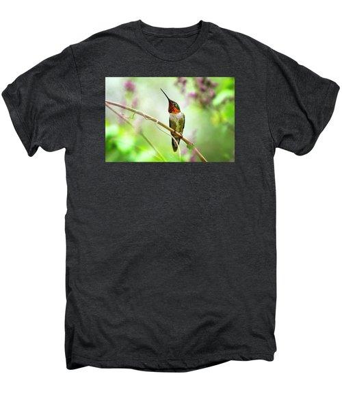 Hummingbird Looking For Love Men's Premium T-Shirt