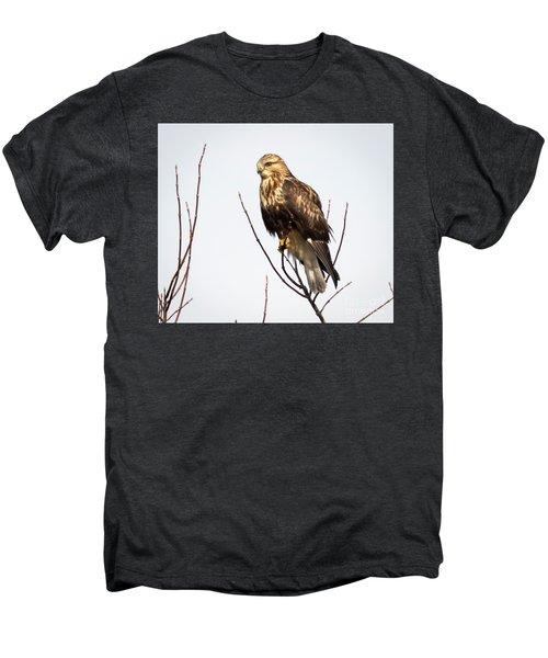 Juvenile Rough-legged Hawk  Men's Premium T-Shirt
