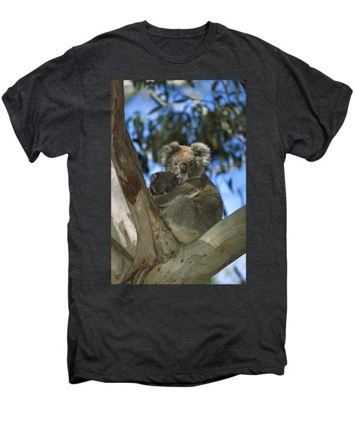 Koala Phascolarctos Cinereus Mother Men's Premium T-Shirt by Konrad Wothe