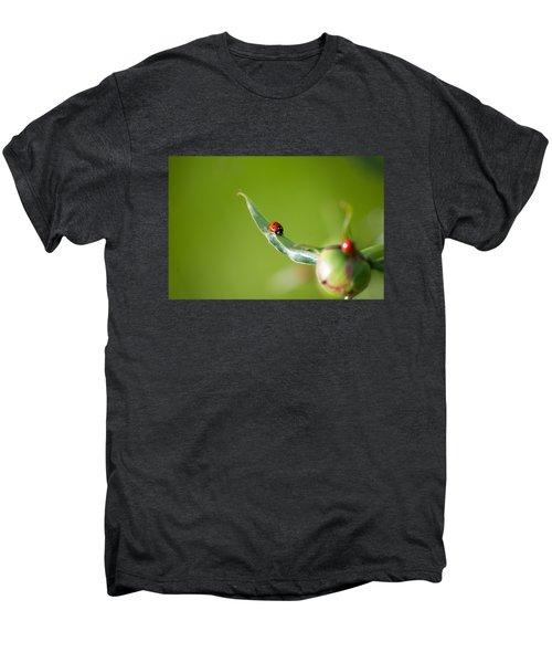 Ladybug On Flower Men's Premium T-Shirt by Konstantin Sevostyanov