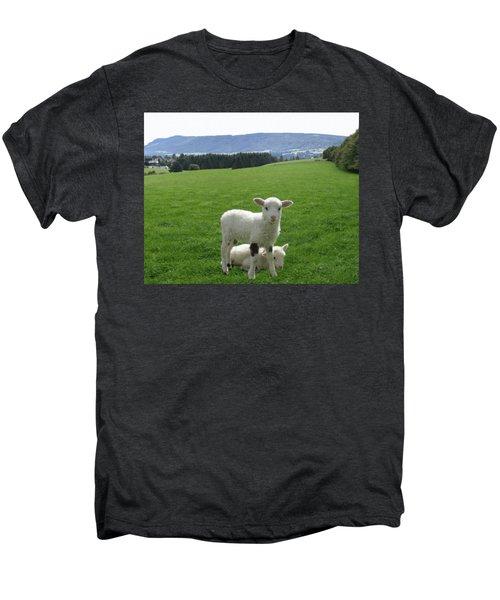 Lambs In Pasture Men's Premium T-Shirt by Dominic Yannarella