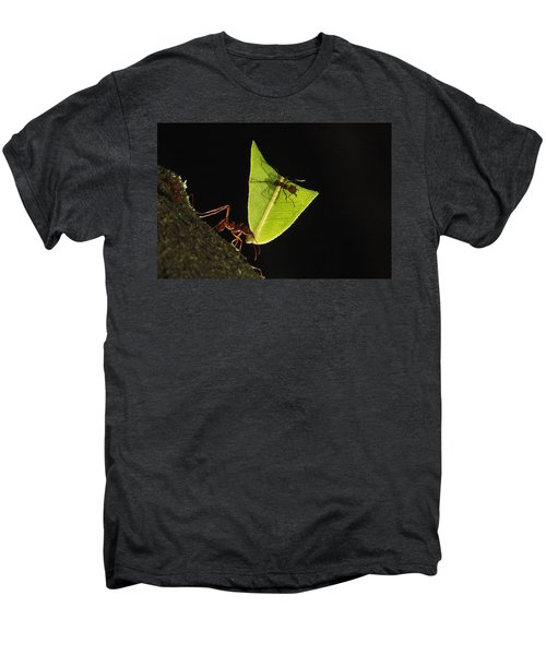 Leafcutter Ant Atta Sp Carrying Leaf Men's Premium T-Shirt by Cyril Ruoso