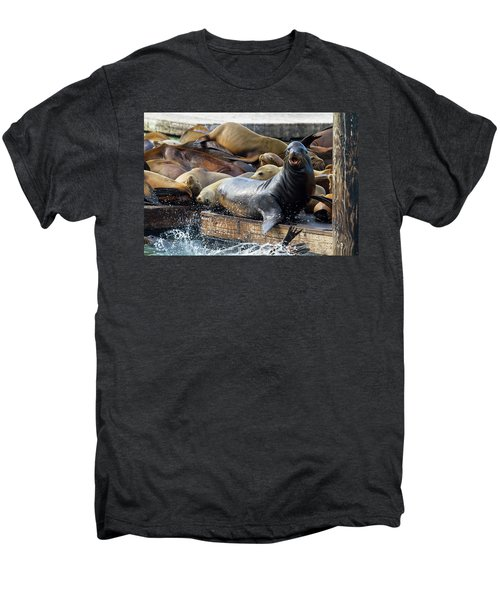 Sea Lions On The Floating Dock In San Francisco Men's Premium T-Shirt