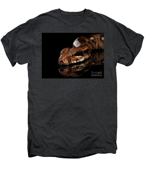 The Boa Constrictors, Isolated On Black Background Men's Premium T-Shirt by Sergey Taran