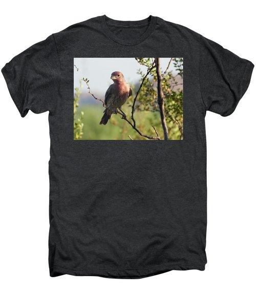 Young Male House Finch Men's Premium T-Shirt