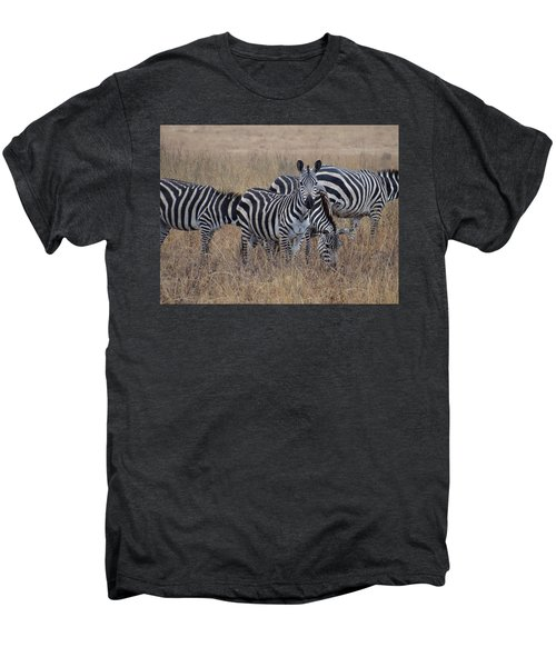 Zebras Walking In The Grass 2 Men's Premium T-Shirt by Exploramum Exploramum