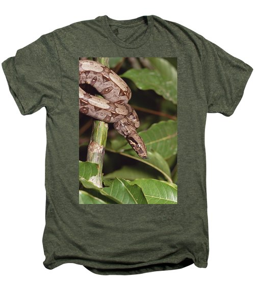 Boa Constrictor Coiled South America Men's Premium T-Shirt by Gerry Ellis
