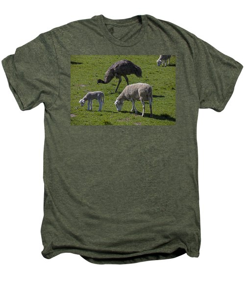 Emu And Sheep Men's Premium T-Shirt by Garry Gay