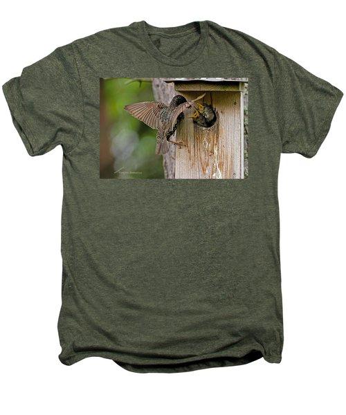 Feeding Starlings Men's Premium T-Shirt by Torbjorn Swenelius
