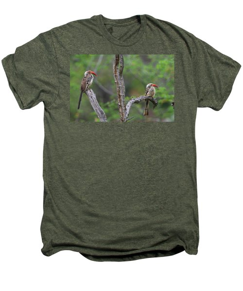 Red-billed Hornbills Men's Premium T-Shirt by Bruce J Robinson