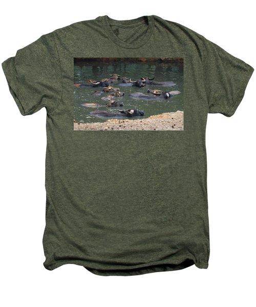 Water Buffalo Men's Premium T-Shirt