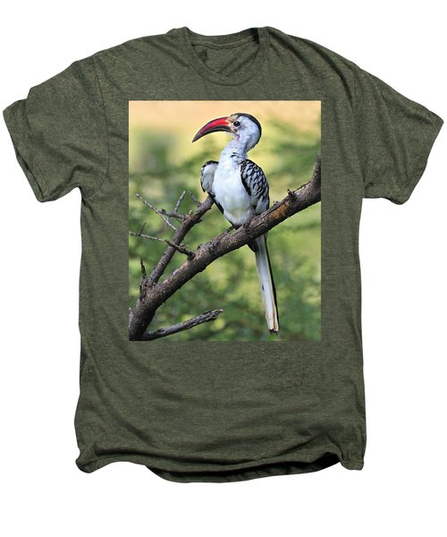 Red-billed Hornbill Men's Premium T-Shirt by Tony Beck