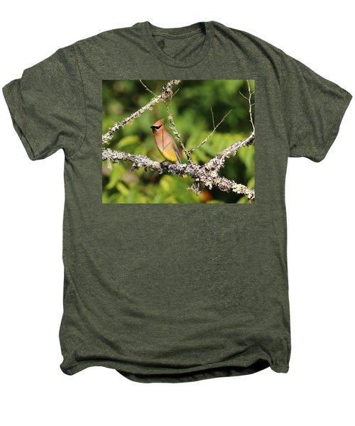 Cedar Waxwing  Men's Premium T-Shirt by Carol R Montoya