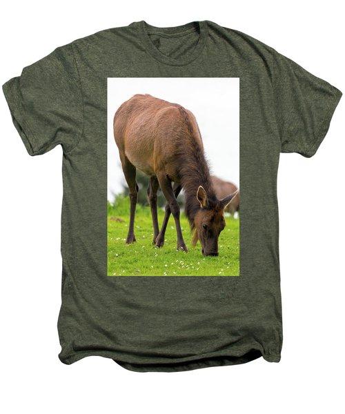 Elk Grazing On Green Pasture Closeup Men's Premium T-Shirt