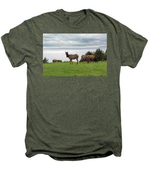Herd Of Elk At Ecola State Park Men's Premium T-Shirt