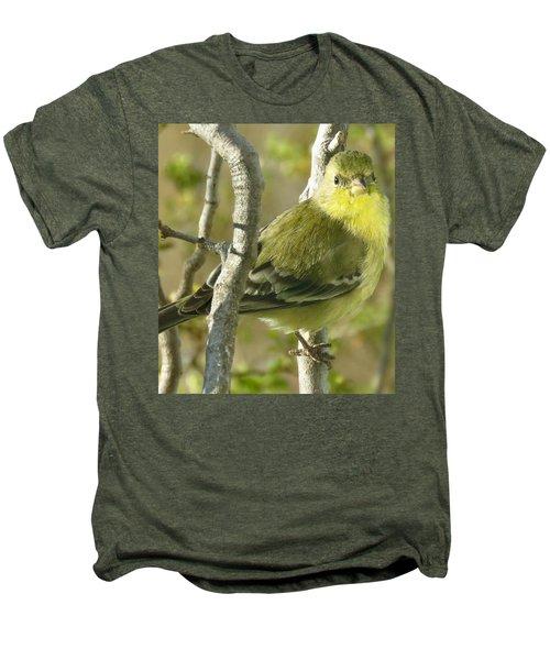 Lesser Goldfinch 1 Men's Premium T-Shirt