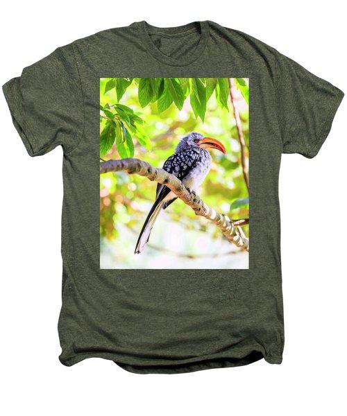 Southern Yellow Billed Hornbill Men's Premium T-Shirt by Alexey Stiop
