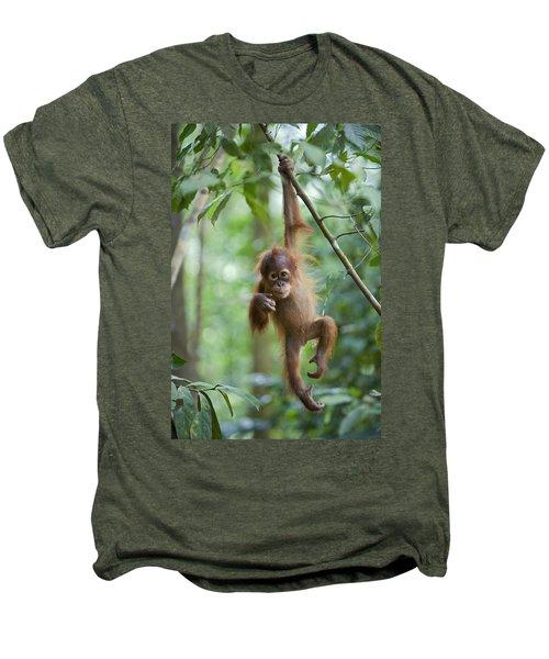 Sumatran Orangutan Pongo Abelii One Men's Premium T-Shirt by Suzi Eszterhas