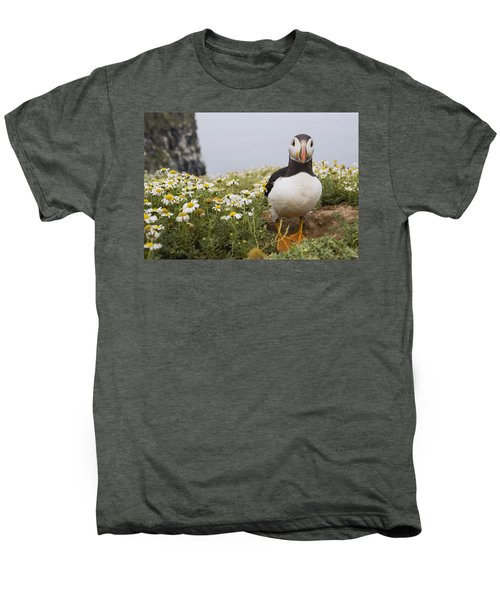 Atlantic Puffin In Breeding Plumage Men's Premium T-Shirt