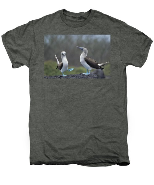Blue-footed Booby Courtship Dance Men's Premium T-Shirt by Tui De Roy