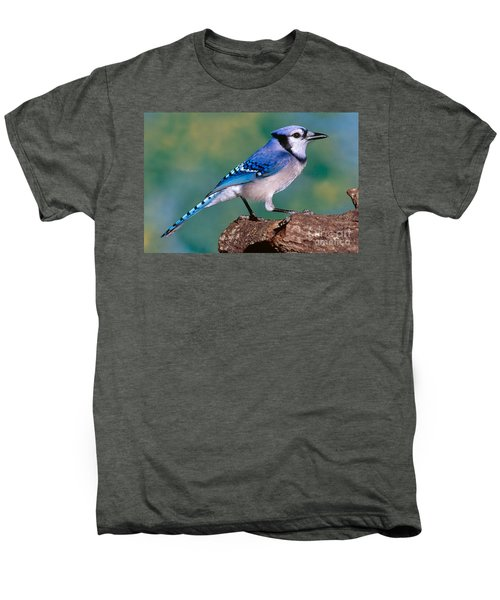 Blue Jay Men's Premium T-Shirt by Millard H. Sharp