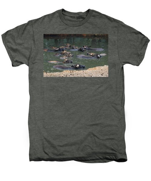Water Buffalo Men's Premium T-Shirt