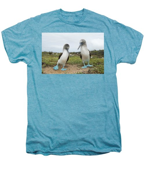 Blue-footed Booby Pair Courting Men's Premium T-Shirt by Tui De Roy
