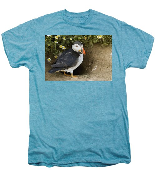 Atlantic Puffin At Burrow Skomer Island Men's Premium T-Shirt